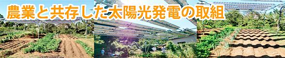 農業と共存した太陽光発電の取組